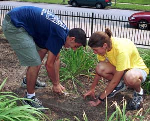 Washington University undergraduates help pull weeds at Hamilton Elementary School during the fourth annual Service First in 2002.