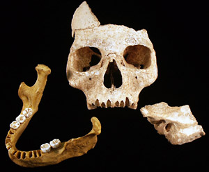 A human jawbone (left), dated to between 34,000 and 36,000 years ago, along with a facial skeleton (center) and a temporal bone (right), both of which are still undergoing analysis, but are likely to be the same age as the jawbone.
