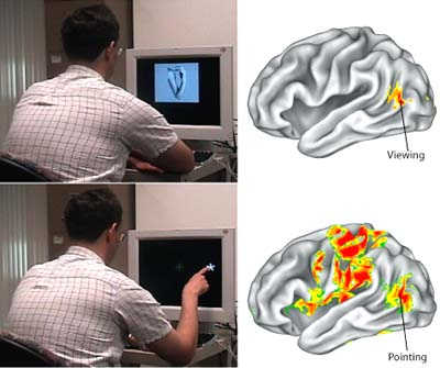 Researchers discovered activity in a part of the visual system called the extrastriate body both when subjects viewed body parts and when they pointed to an object.