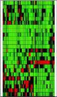 A look at the activity of 24 genes in 52 patients as those genes respond to the chemotherapy drug 5-fluorourancil
