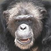 Clint's DNA was used to sequence the chimp genome.