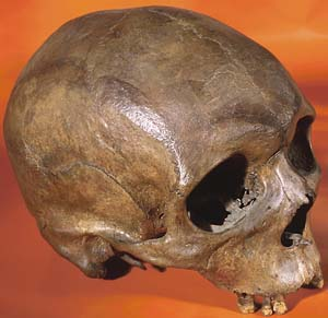 *Homo sapiens*: 'Out of Africa' three distinct times, new analysis shows