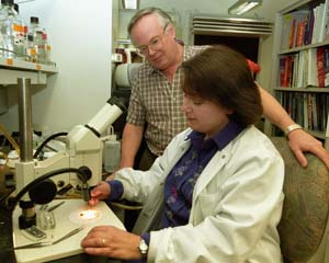 Dianne and Ian Duncan examining a *Drosophila* species in their lab.