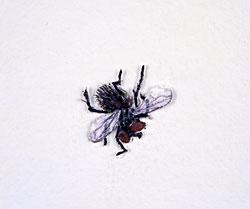 Tom Friedman, *Untitled [Paper Fly]*