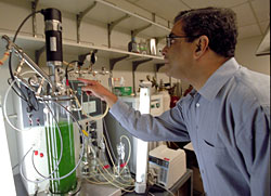 Himadri Pakrasi explains the photobioreactor in his Rebstock Hall laboratory.  Inside the tube photosynthetic bacteria are making ethanol more efficiently than other forms of biomass because  the  cyanobacteria are natural fermentators.