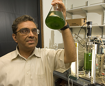Himadri Pakrasi holds a collection of *Cyanothece*, a one-celled marine cyanobacteria.