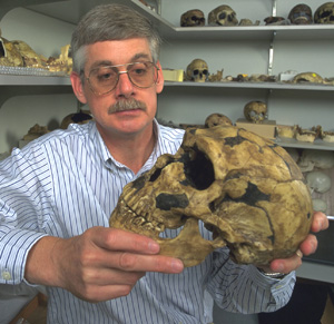 Erik Trinkaus, WUSTL professor of anthropology in Arts & Sciences, holding a Neandertal skull, says the evidence is very convincing that Neandertals and early humans mixed.