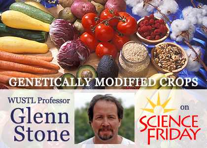 science friday npr glenn stone march source biotech promises packed vitamins drought cassava developing resistant farmers corn countries wonder rice