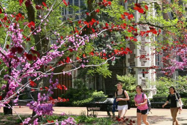 Washington University maintains Tree Campus USA status