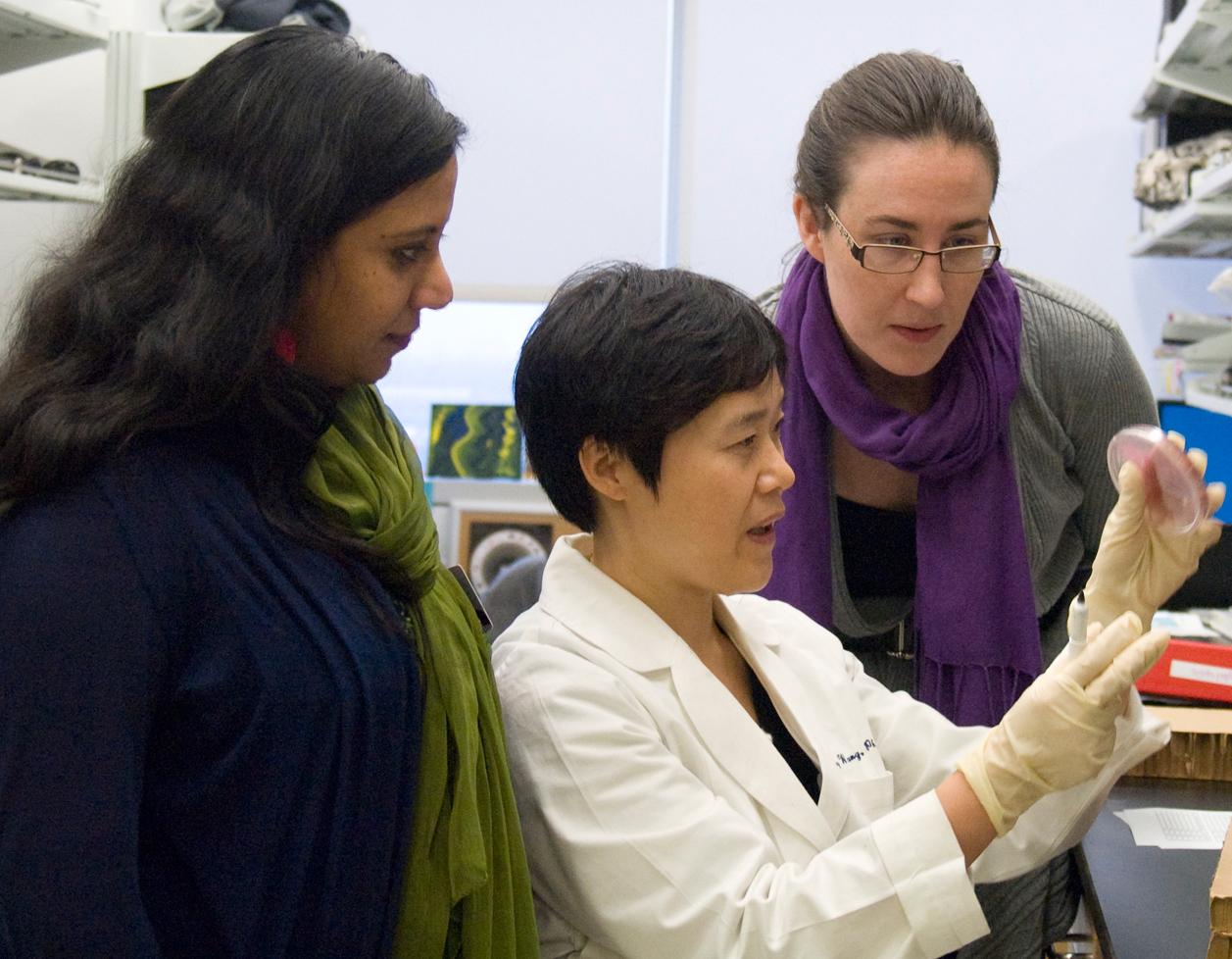Doctors examine culture dish