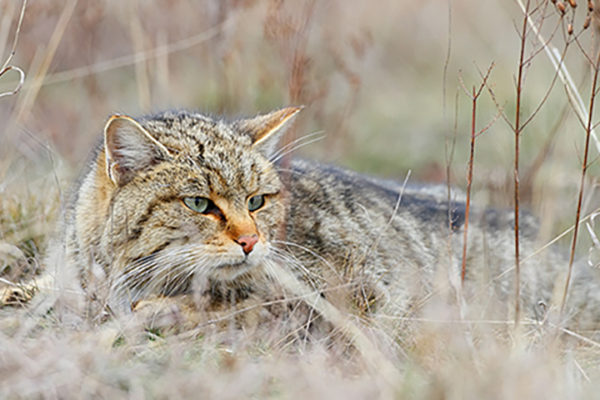 Cat domestication traced to Chinese farmers 5,300 yearsago