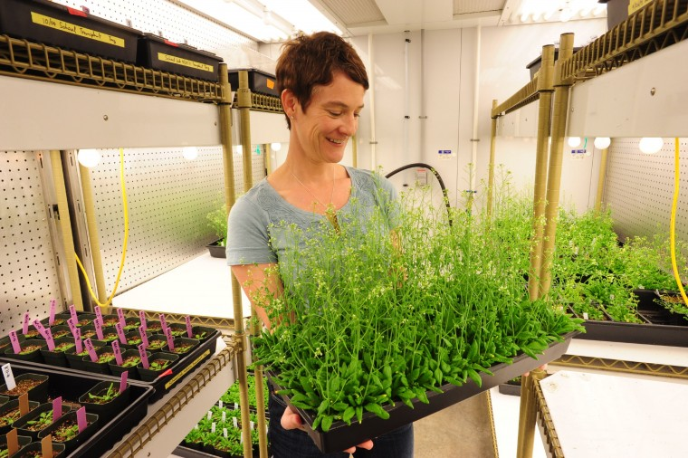 Elizabeth Haswell, plant biologist, holding tray of thale cress