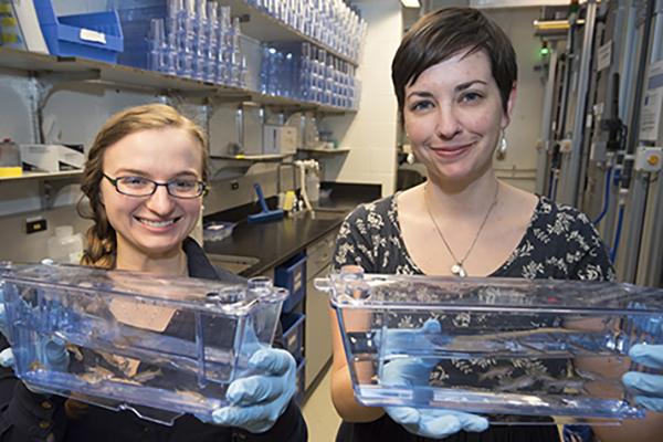 Scientists find gene vital to central nervous system development
