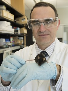 Washington University diabetes researcher Carlos Bernal-Mizrachi, MD, shown with a mouse that lacks the ability to process vitamin D in key immune cells. Without adequate vitamin D in those cells, the animals developed diabetes and atherosclerosis.