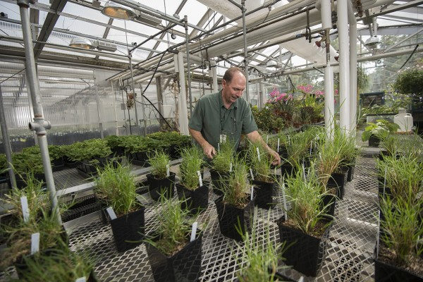 man works with plants in greenhouse