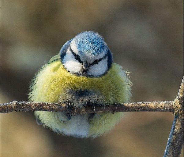 Fluffed up bird.