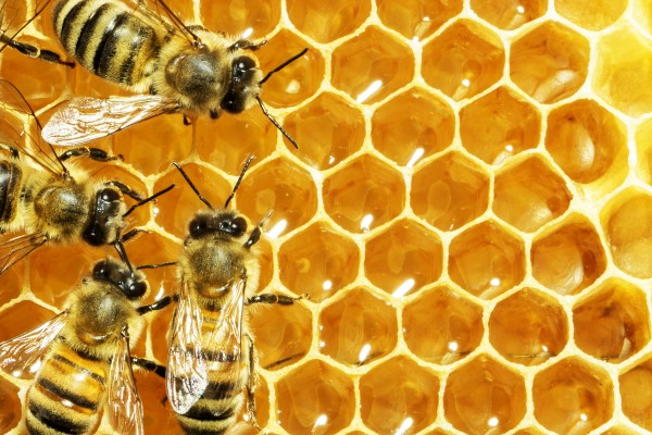 The secret life of bee genes