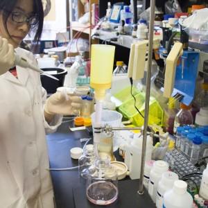 Haiyan Zhao purifies the Zika surface protein.