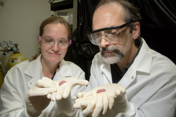 Senior scientist Terra Barnes and Tim Holy, associate professor of neuroscience, hold mouse pups. Barnes and Holy recorded the vocalizations of 3- to 8-day-old mouse pups and found that those that carry a mutation in a gene associated with stuttering in humans produced abnormal vocalizations with pauses and repetitions similar to human stuttering. (Photo: Robert Boston/School of Medicine)