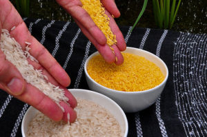 Golden Rice (top) has a distinctive yellow hue.