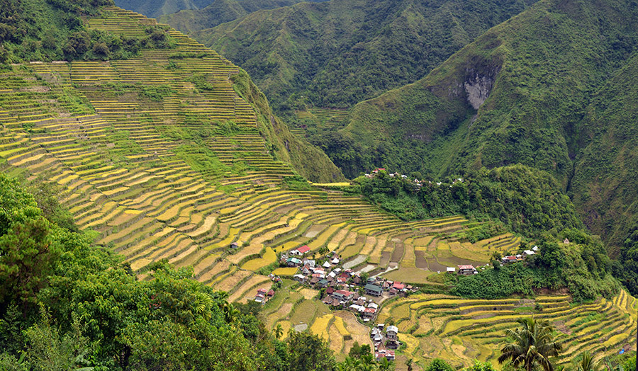 Rice fields in the Cordillera mountains of northern Luzon, the Philippines