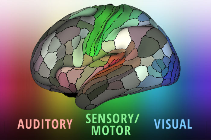 A detailed new map by researchers at Washington University School of Medicine in St. Louis lays out the landscape of the cerebral cortex – the outermost layer of the brain and the dominant structure involved in sensory perception and attention, as well as distinctly human functions such as language, tool use and abstract thinking. (Image: Matthew Glasser/Eric Young)
