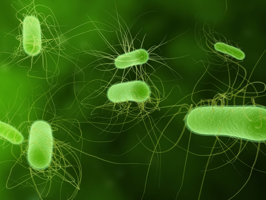 Engineers at Washington University in St. Louis have found a new way to boost biofuel production in E. coli bacteria by altering its protein structure.