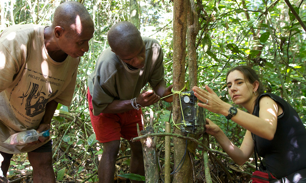 Crickette Sanz (right) and Congolese researchers help secure a remote camera