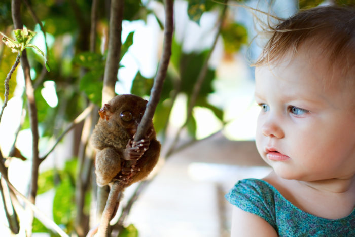 Cute little girl looking at tarsier smallest primate