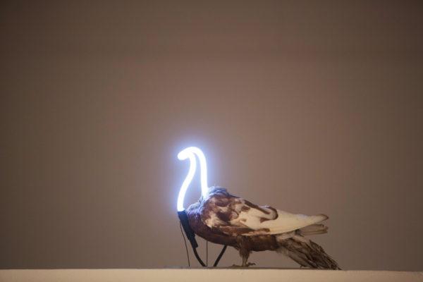 "Erik L. Peterson (BFA in sculpture 2004). ""Neon Pigeon,"" 2014. Taxidermy pigeon, neon and transformer. (Photo: Jerry Naunheim Jr./Washington University)"