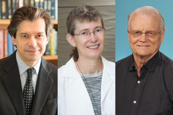 The American Association for the Advancement of Science has named (from left) Azad Bonni, MD, PhD, Phyllis I. Hanson, MD, PhD, and Gary Stormo, PhD, as 2016 fellows in recognition of their scientific accomplishments.