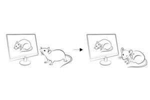 drawings of mice watching others scratch
