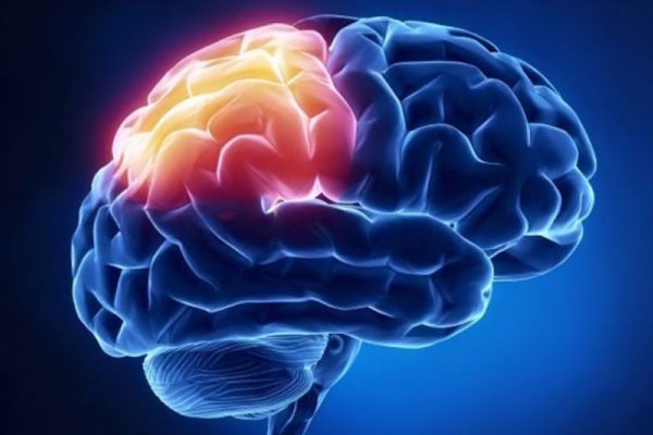 Researchers to model brain's memory network