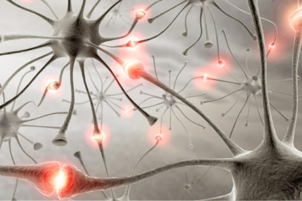 neurons in brain