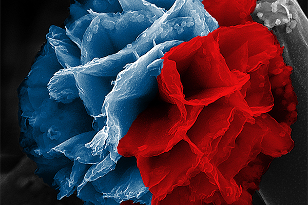 Red and blue nanoflower