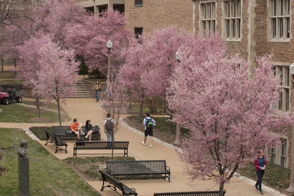 Washington University celebrates its allées on Arbor Day