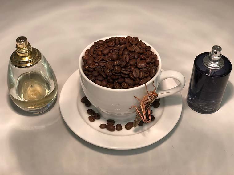 Locust with coffee beans and perfume