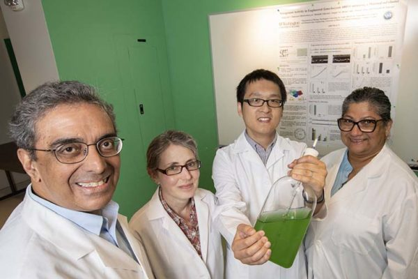 Researchers engineer bacteria that create fertilizer out of thin air