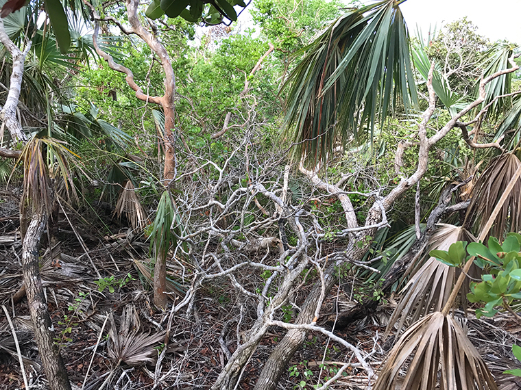 Post-hurricane vegetation