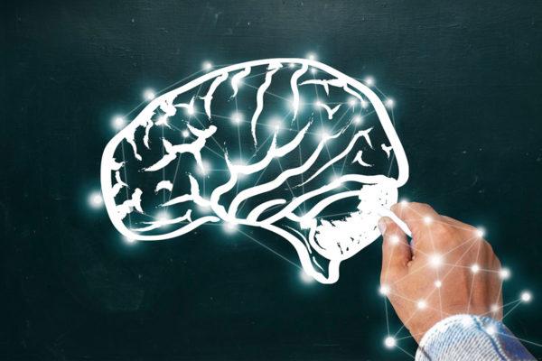 cerebellum image