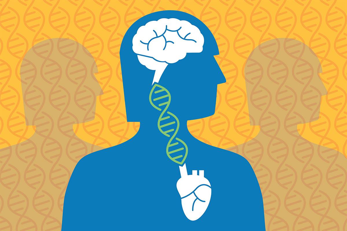 San Francisco Law School >> Cardiovascular disease, Alzheimer's genetically linked | The Source | Washington University in ...