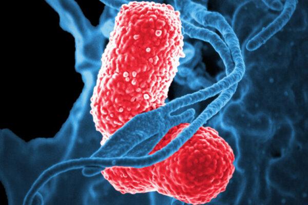 Vaccine against deadly superbug Klebsiella effective inmice