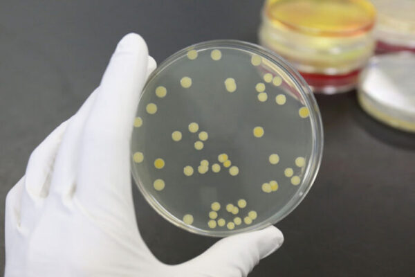 Why isn't there a vaccine for staph?