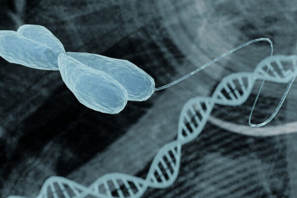 'Jumping genes' help stabilize DNA folding patterns