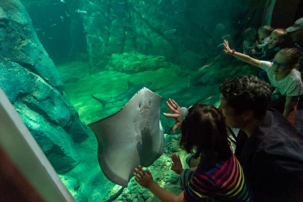 "Visitors to the St. Louis Aquarium love Shark Canyon. ""You walk down a long hallway with intermittent little windows providing partial views of the shark tank, and then you turn a corner and see the 'wow' window,"" Mike Konzen says. (Photo: Courtesy of St. Louis Union Station)"