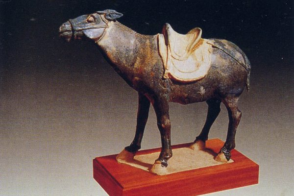 Tang Dynasty noblewoman buried with her donkeys, for the love ofpolo