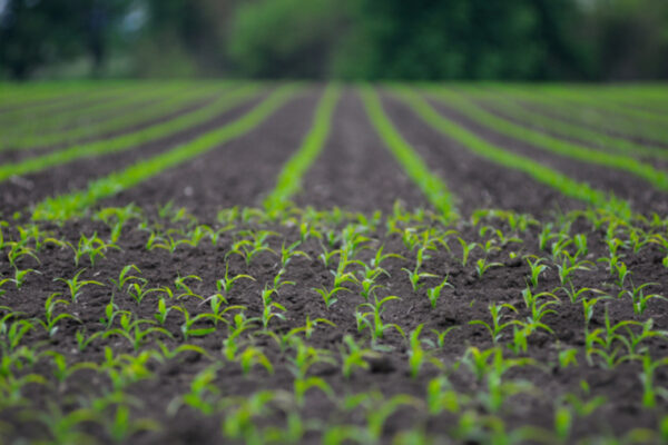 New method for measuring RNAi pesticide in soil