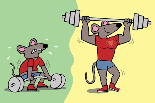 Gene therapy in mice builds muscle, reduces fat
