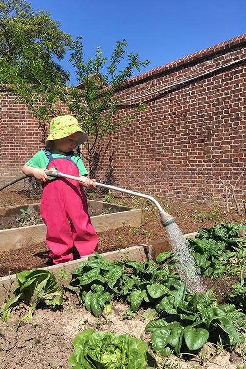 Farmer Delaney watering crops.