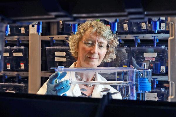 Researcher receives NIH funding for zebrafishwork